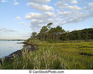 Wetlands - A wide angle view of the wetlands near Ocean...
