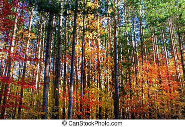 Colorful Trees - colorful trees during autumn time in a...