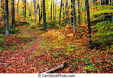 Autumn Trees - Colorful trees in a forest during autumn time