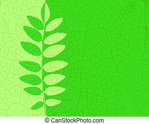 Ash leaf - Illustration of an ash leaf with veins