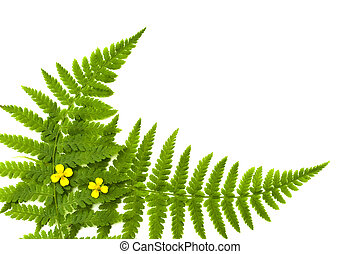 fern frame with small yellow flowers
