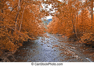 Fall at the river - Fall in the mountains, bright colors,...