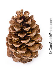 Pine Cone with white background