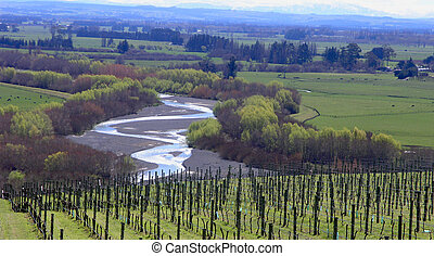 Meandering River - A meandering river with rows of grapes in...