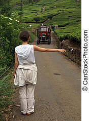Hitch-hiking - On the tea plantation near Haputale, Sri...