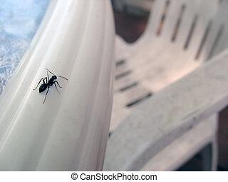 mrówki, Świat