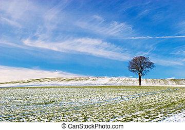 Tree on Snowy Field