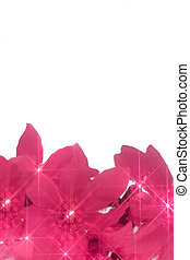 pink christmas lights - pink twinkiling poinsettia christmas...
