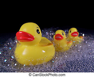Rubber Ducks in Soap Suds - Three bright yellow rubber duck...