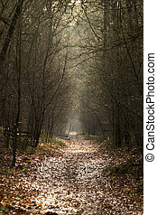 forest road - a nice fores road in fall
