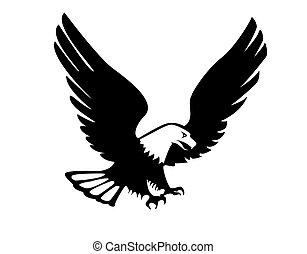 águia, Ilustração