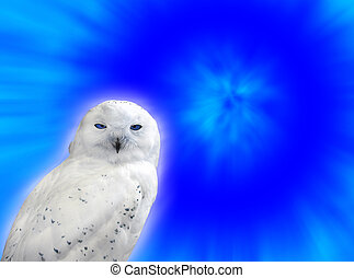 Snowy owl - A snowy owl against a blue background