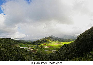 Agricultural Fields - Taro Fields in Kauai, Hawaii