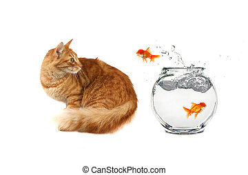 Cat Looking at a Gold Fish Jumping Out of Water on White...