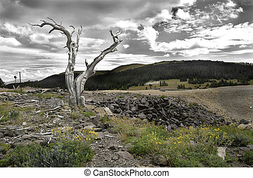 The Mines - Stark trunk of pine tree marks the spot where...