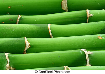 bamboo background 2 - close-up of young bamboo sticks
