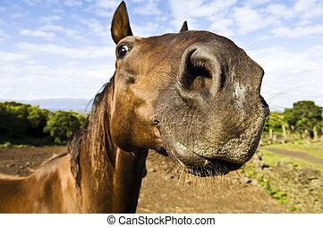inquiridor, cavalo