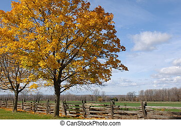 Lovely Landscape - autumn leaves still on the tree in this...