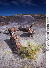 Petrified logs - Log of petrified wood in the Petrified...