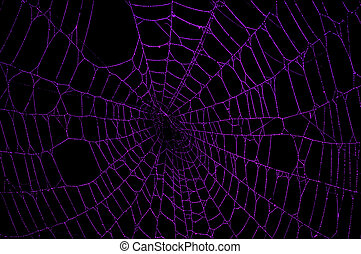 Purple Spider Web - Purple spider web against a black...