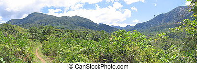 Tropical jungle with high mountains, Andapa, Marojejy park,...