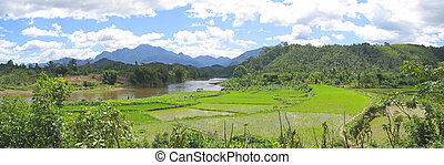 River and ricefields with mountains and jungle, Andapa,...
