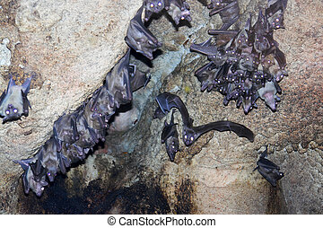 Group of bats in the undergorund cave
