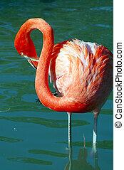 flamant rose, oiseau