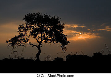 Tree silhouette in the sunrise light Italy