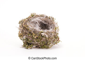 Birds nest on white