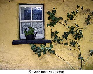 irlandais, vieux, fenêtre