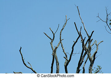 Dead Tree limbs against a blue sky