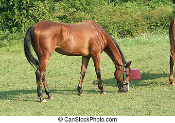 Brown Horse - a Brown Horse standing in a field
