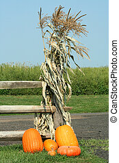 Pumkins and corn stalks - A bunch of Pumkins and a corn...