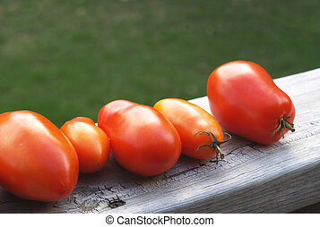 ripening tomatoes - garden fresh tomatoes ripening on rustic...
