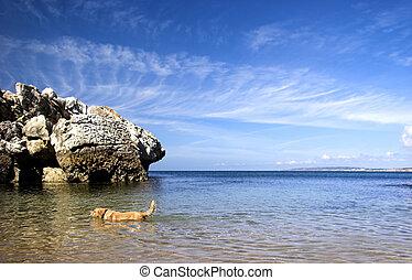 Dog beach - Beautiful blue beach with a Labrador retriever...