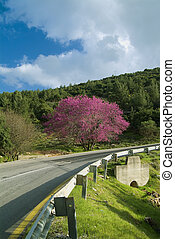 Cercis and  Road