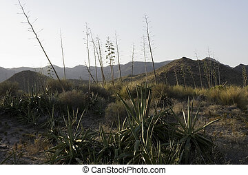 desierto, escena