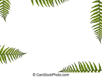 Fern Abstract - Abstract border design of segments of five...