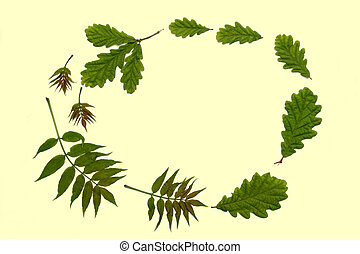 Ash and Oak Leaves - Oval arrangement of fresh oak and ash...