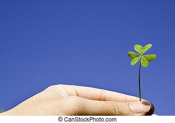 Finger holiding a clover in sky background - Finger holding...