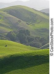 Mount diablo foothills - East Bay agricultural land near san...