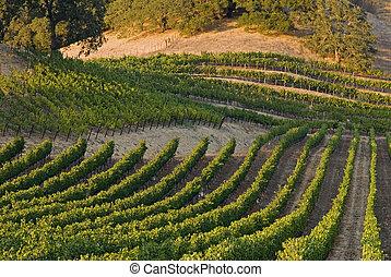napa valley vineyards,california