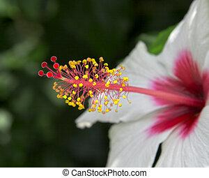 Nectar flower