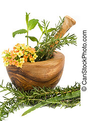 Herbs - Healthy aromatic herbs in a spa mint, rosemary, aloe...