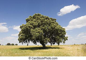 Oak tree in sunny day