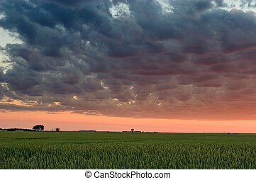 Wheat field sunset - Sunset over wheat field, Gilbert...