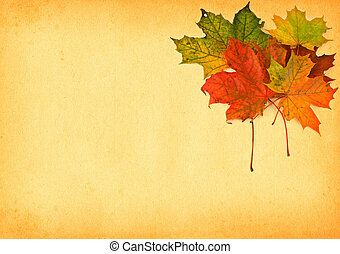 maple leaves against paper - group of multicolored maple...