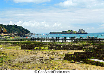 Oyster beds in Cancale, France