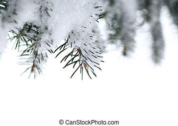 spruce, Takken, sneeuw